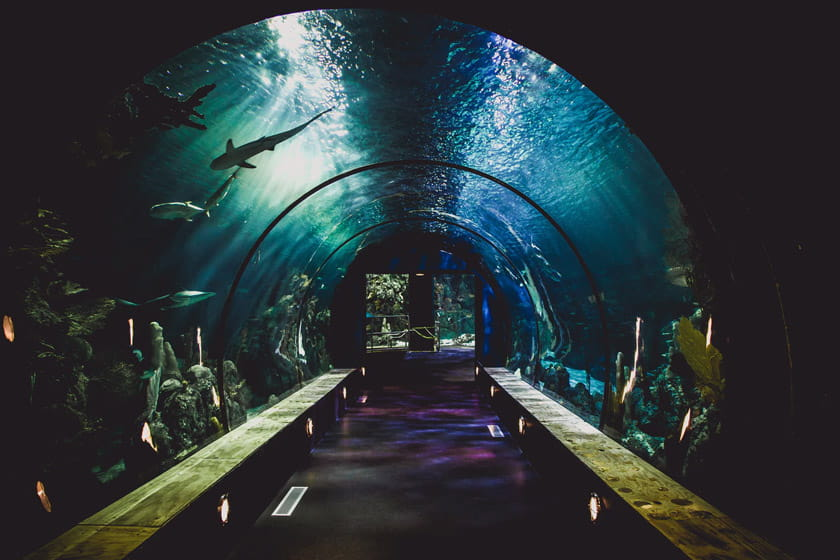 Things to do in Bangkok: Sea Life - Siam Underwater Museum
