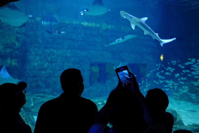things to do in orlando: seaworld