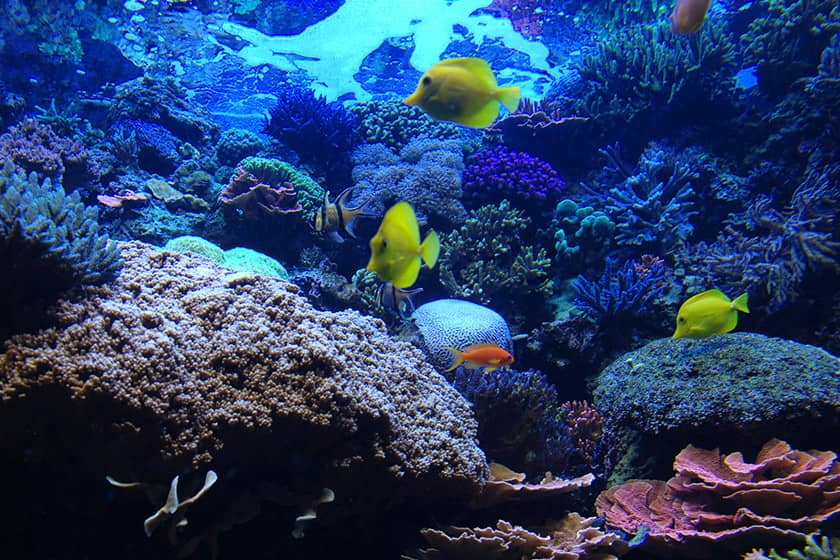 Things to do in Denver Co - Downtown Aquarium